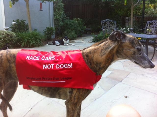 Nellie racing