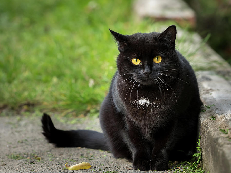 black cat spot