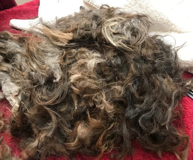 Mare Island brown dog fur