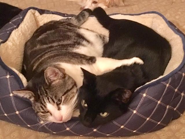 Jack and Dash hugging