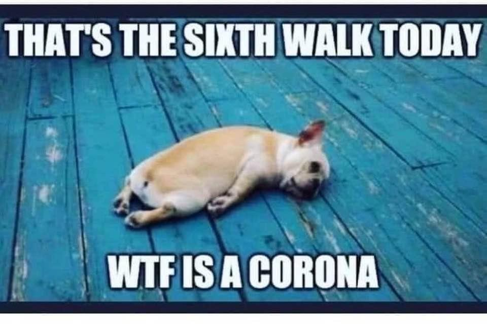 Corona virus dog